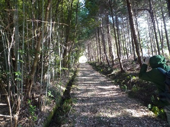 P1130514林間山道.JPG