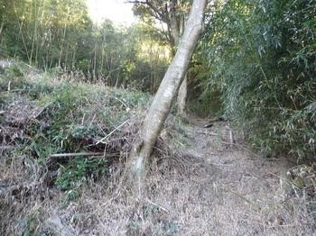 P1130522伐採谷沿いの山道.JPG