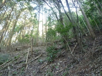 P1130526植林帯.JPG