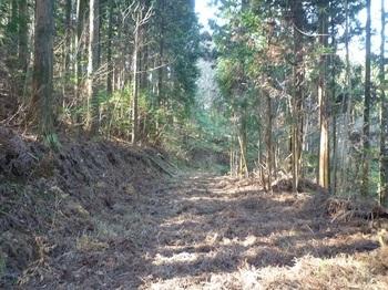 P1130554林道.JPG