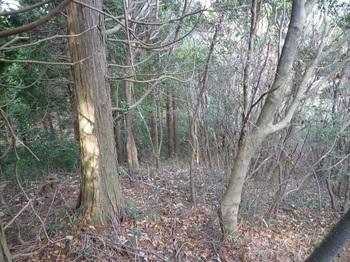 P1130565ヒノキ植林境.JPG
