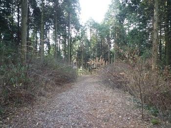 P1130567左方向の林道.JPG