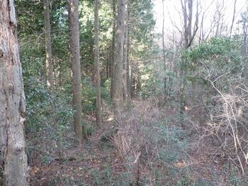 P1130570植林境.JPG