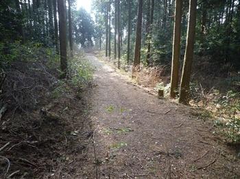 P1130572鞍部左の林道終点部.JPG