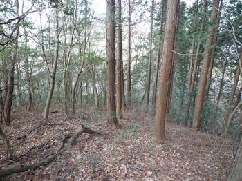 P1130583ヒノキ植林境.JPG