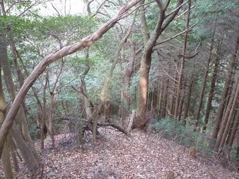 P1130586植林境.JPG