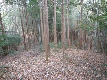 P1130590ヒノキ林境(右へ).JPG