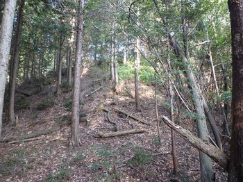 P1130591植林境.JPG