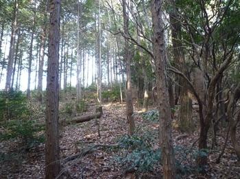 P1130594鞍部から植林境.JPG