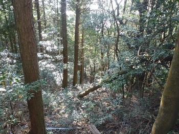 P1130712植林境切り開き.JPG