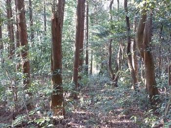 P1130717植林境.JPG