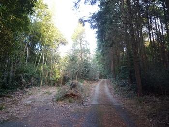 P1130742林道分岐(左)逆方向.JPG