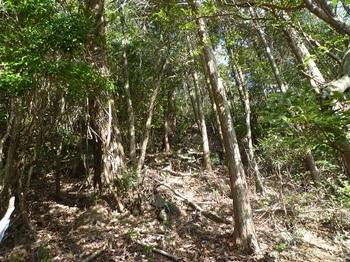 P1130804植林境の切り開き.JPG