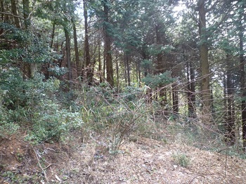 P1130812林道からの取り付き.JPG
