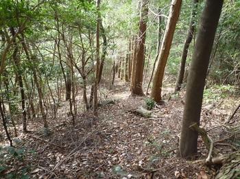 P1130821ヒノキ林境.JPG