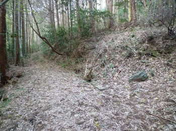 P1130879林道分岐(右へ)・次第に作業道程度となる.JPG