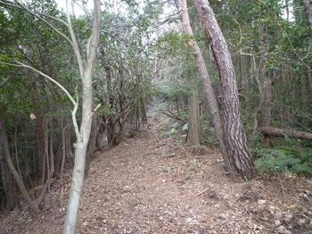 P1130901支尾根上の山道.JPG