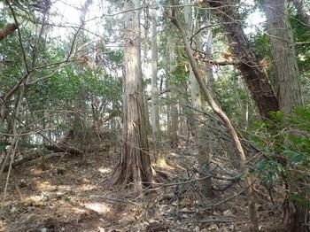P1130906荒れ気味の植林境.JPG
