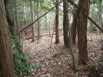 P1130927荒れ気味のヒノキ林境.JPG
