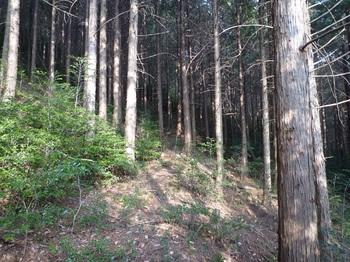 P1130942幅広の山道に出る(左方向).JPG