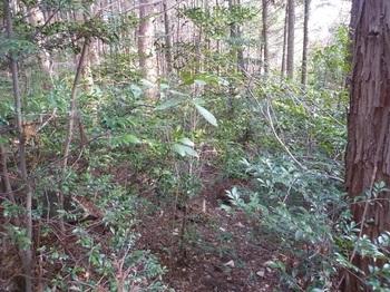 P1130947ヤブ気味の山道.JPG