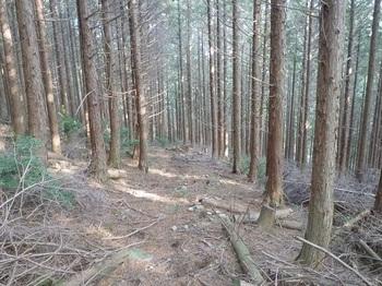 P1130951作業道風の山道.JPG