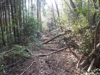 P1130958左斜面・倒木が目立つ.JPG
