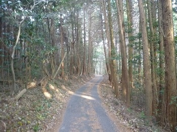 P1130963県道.JPG