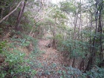 P1130969雑木林沿いの山道.JPG