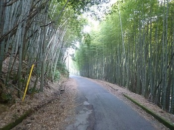 P1130979県道.JPG