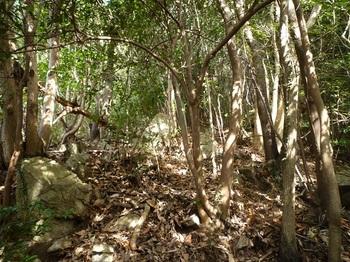 P1140134右の雑木林へ逃げ込む.JPG