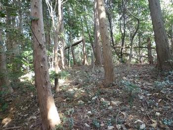 P1140169寺門山西ピーク?(560m).JPG