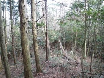 P1140179ヒノキ植林境・支尾根分岐点.JPG