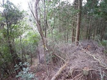 P1140211伐採木で荒れた尾根.JPG