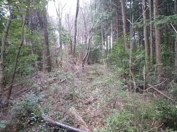 P1140222ヤブ気味のヒノキ林境.JPG
