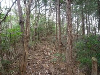 P1140237ヒノキ植林境の主尾根へ出る.JPG