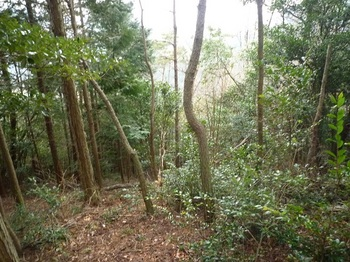 P1140243植林境尾根へ.JPG