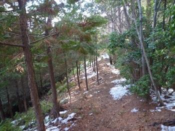 P1140511左ヒノキ植林境.JPG