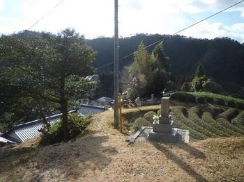 P1140533墓地・茶畑.JPG