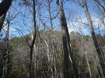 P1140635前方樹間に八久保山.JPG