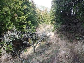P1140679カヤ被りの林道.JPG