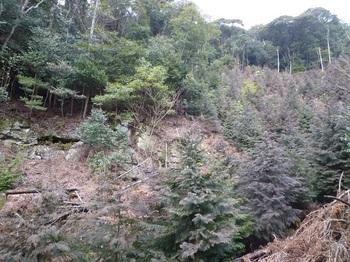 P1140699ヒノキ谷・対岸の斜面.JPG