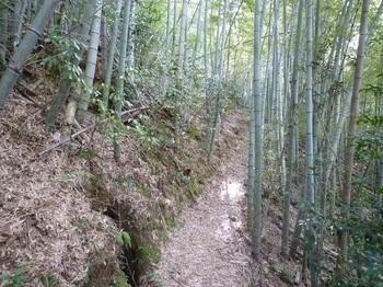 P1140774竹林の巻き道.JPG