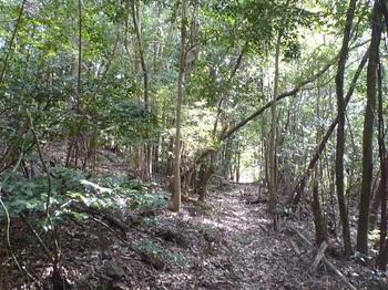 P1140775雑木林の巻き道.JPG