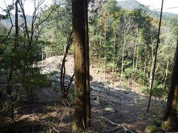 P1140788下方の伐採地.JPG
