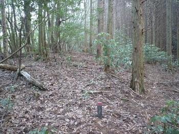 P1140804ヒノキ林境・林業公社プラ杭.JPG