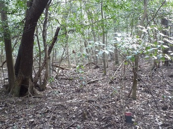 P1140806雑木疎林帯へ入る.JPG