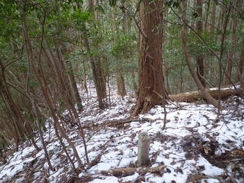 P1140868境界標(火の用心)・右ヒノキ林境.JPG