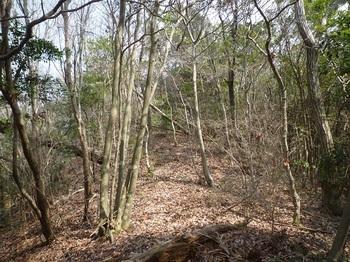 P1150030雑木疎林の主稜線.JPG