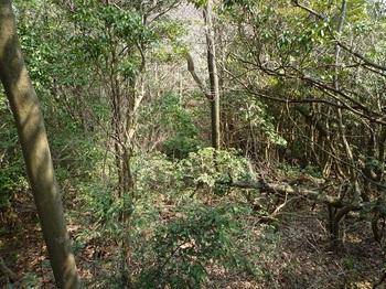 P1150033灌木が茂る.JPG